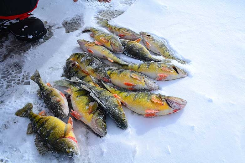 Weed Lines for Ice Perch
